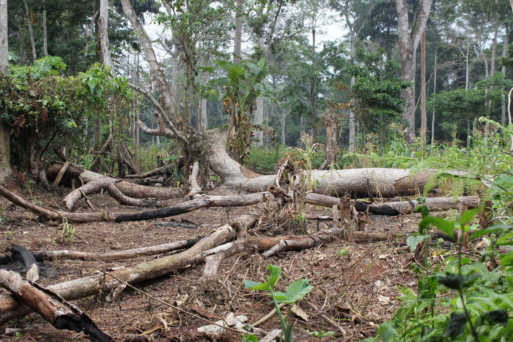 Small-scale deforestation is most common in Équateur, as farmers need fertile forest soil to grow crops.