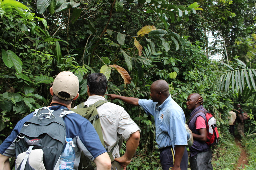 A tour of the forest surrounding Bokumu Mokola took Dr. Bush and Dr. Walker through several kilometers of primary and secondary forest.